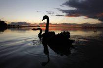 Черные лебеди российской экономики